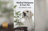 Cannabis and Pets: What's the Veterinarian's Role