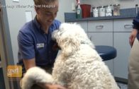 Pet Peace of Mind: Bringing Comfort to Pet-Owning Hospice Patients