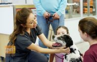New Partnerships Seek to Make Veterinary Care More Accessible