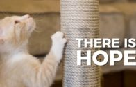 Curbing Destructive Scratching Behavior in Cats: A New Solution from Ceva