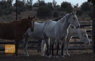 Examining the Shortage of Large Animal Veterinarians in Arizona