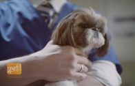 New Hope for Treating Dogs with Epilepsy