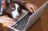Telehealth: How it Could Change Veterinarians' Approach to Care