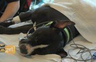 Banfield Pet Hospital® Unveils New Anesthesia Program