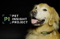 Mars Petcare Harnesses Big Data in Pet Insight Project