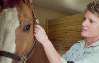Spark Stories: Leann's Prayer Gets an Answer
