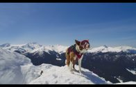 Why You Should See The IMAX Movie—Superpower Dogs!