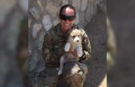 Spark Community Stories: The Army Veterinarian
