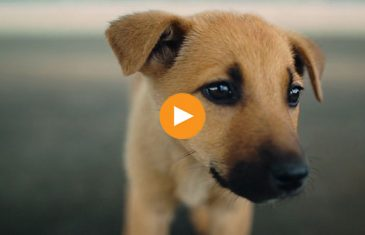 Video thumbnail image featuring cute puppy