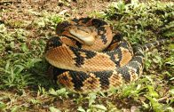Spark Community Stories: Close Encounter with a Bushmaster