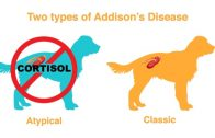 Addison's Disease: The Great Pretender