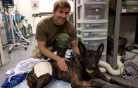 Spark Community Stories: Veterinary Medicine on the Battlefield