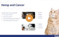 CBD Webinar Series — Anti-Cancer Effects of CBD