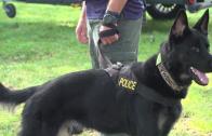 Get Certified—Penn Vet Working Dog Practitioner Program