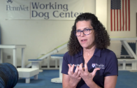 Learning About Working Dogs Benefits Everyone