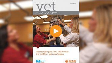VET Report Thumbnail play