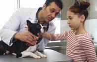 Culturally Competent Care in Veterinary Medicine