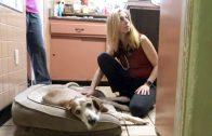 Spark Clinic Spotlight: Thompson's Veterinary Center