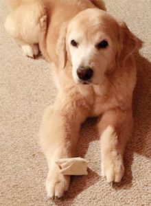 EMME, my 12-year-old golden retriever, is a retired show dog who now enjoys a leisurely life playing with squeaky toys, romping in the snow, and swimming in the lake.