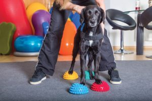 FIGURE1. Balance discs are used to help patients improve proprioception. Image courtesy of shutterstock.com/msgrafixx.