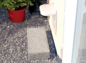 FIGURE 4. A step to help a cat in and out of a cat flap can encourage them to access the outdoors.