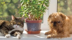 IF THE PET INGESTED A PLANT, identification of the plant is necessary to determine the risk. Plant identification can be difficult when the pet owner is not sure what the plant is. Garden nurseries can sometimes help with identification.