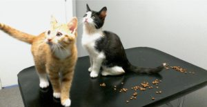 FIGURE 2. Happy kittens in the cat-only consultation room.