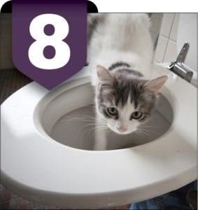 8. TOILET WATER Image courtesy of shutterstock.com/Olivia Lorot