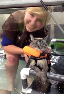 FIGURE A. This feline patient with unknown neurologic trauma affecting both hindlimbs tolerated underwater treadmill exercises and swimming well. Courtesy of Lynn Nalepa