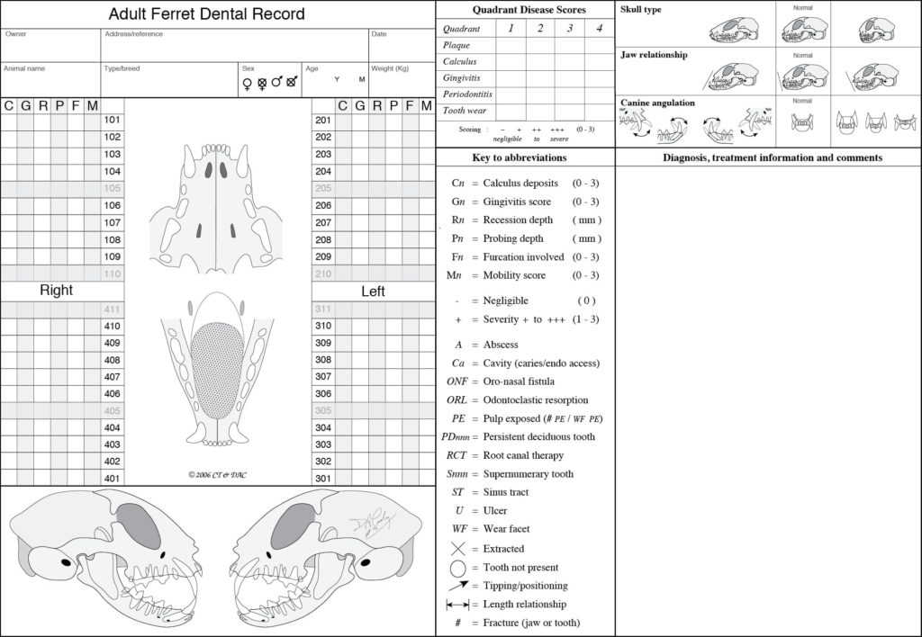 Figure 5. In this dental chart, documentation of skull type, jaw relationship, and canine angulation is incorporated into an overall assessment of the ferret's occlusion. Subjective indices—calculus (C), gingivitis (G), resorption (R), periodontal pocket depth (P), furcation (F), and mobility (M)—can be recorded for each tooth. Overall quadrant indices for plaque, calculus, gingivitis, periodontal disease, and tooth wear are also included. Courtesy of Dr. David Crossley